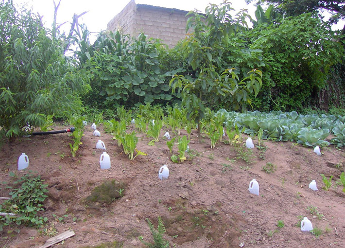 Greywater effluent re-use